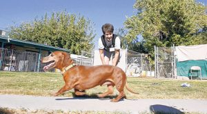 Fundraisers aid abandoned pet groups