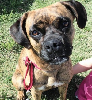 Pet of the Week: Sydney
