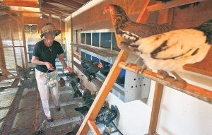 Gilbert hobby farm a labor of love for family 
