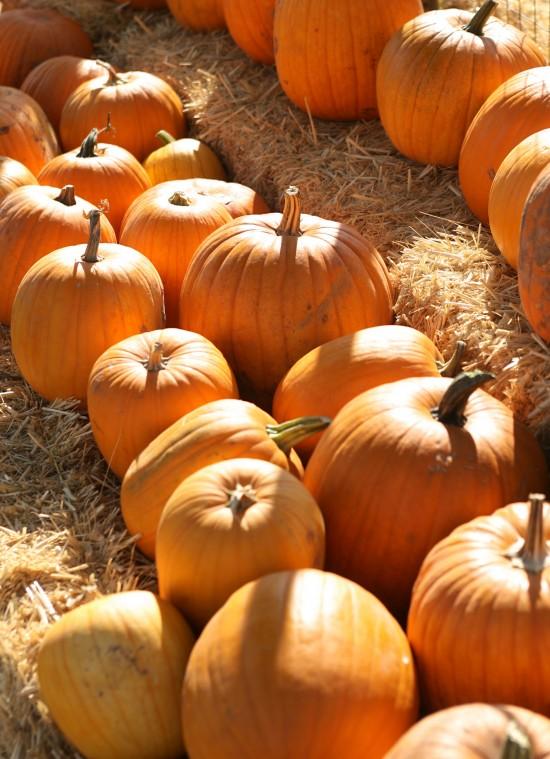 Mother Nature's Farm Pumpkin Patch