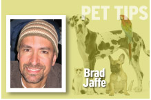 Pet Tips Brad Jaffe