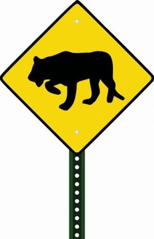 Beware of mountain lions