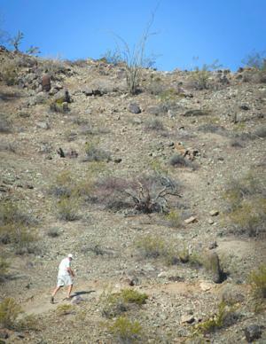 Bursera Trail