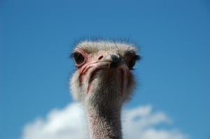 Weird to honor an ostrich? Here are alternatives