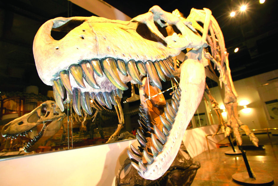 Best of Mesa 2014 Museum: Arizona Museum of Natural History