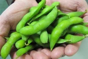 Food_and_Farm___American_Edamame4.jpg