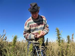 Food And Farm Industrial Hemp