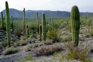 Sonoran Desert