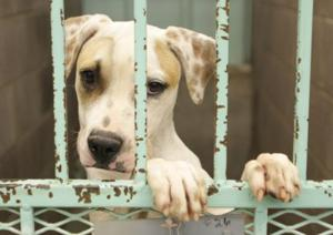 A.J. makes changes to animal cruelty code