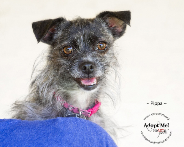 Take me home: Pippa