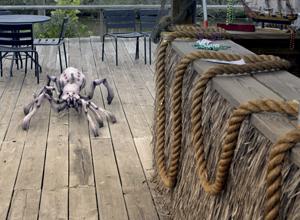 Arachnoquake - 2012