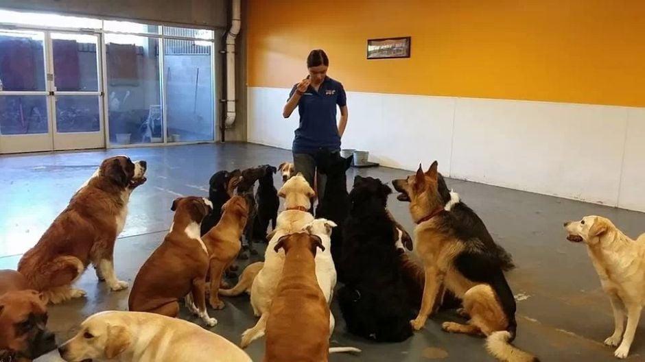 Best of Gilbert 2014 Pet Services & Grooming: Gilbert Dogs 24/7