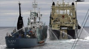 Ships collide in Antarctic whaling clash