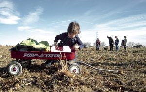 Thousands pick up free vegetables on Colo. farm