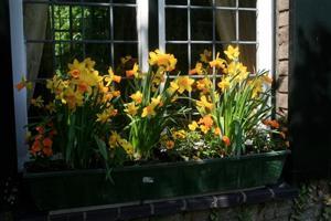 Gardening-Window Boxes