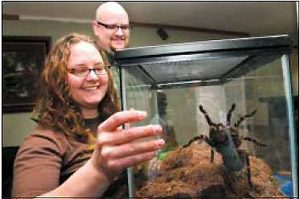 Tarantulas crawl into hearts of East Valley pair