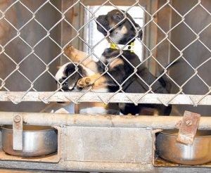 Animal shelters full; more euthanasia possible
