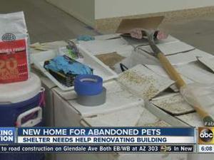 Tempe pet shelter