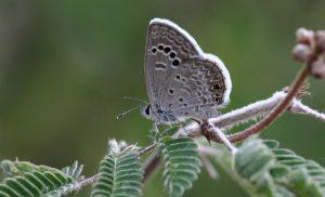 Butterflying is easy, free ... beautiful