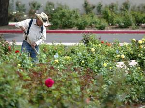 Mesa Community College Rose Garden