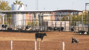 Dairy owner: Fighting city annexation costly