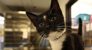Cat rescue group needs new home