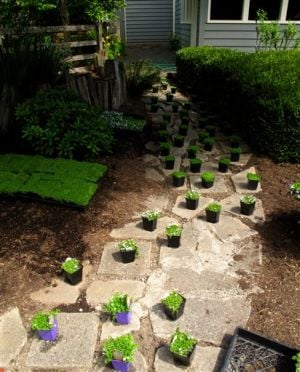 Gardening-Walkable Plants