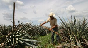 Yardsmart: Talking tequila