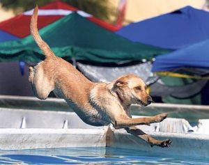WestWorld hosts doggone agility event
