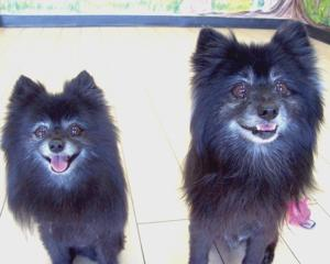 Someone to love: Rocky and Foxy