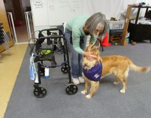 Helper Dog