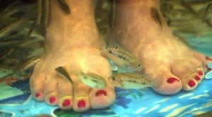 Lawsuit filed over feet-nibbling fish