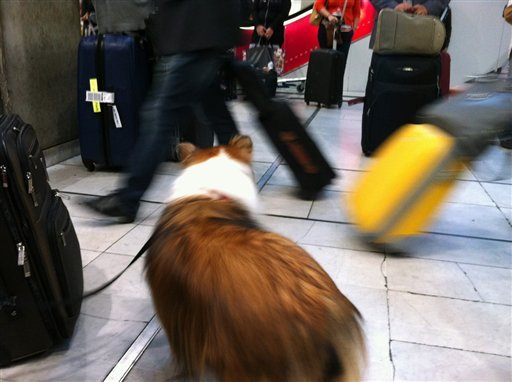 Pets Holiday Travel