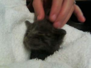 Kittens rescued from Mesa flood waters
