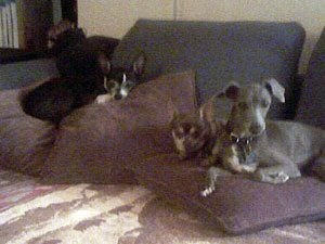 Playmate's Chihuahuas poisoned in Chandler