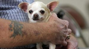 Group seeks homes for rescued dogs