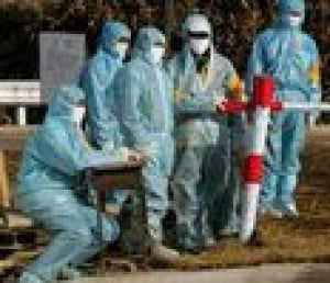 China confirms first human bird-flu cases