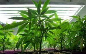 U.S. issues new medical marijuana policy