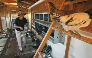 Tour spotlights urban chicken farming