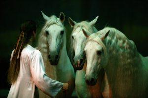 30-horse equine ballet 'Cavalia' in E.V.