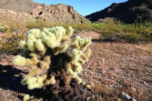 afn.062310.com.hiking5.jpg