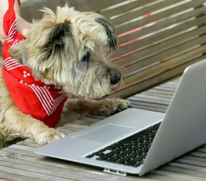Social networking raises fun, funds for rescue pets