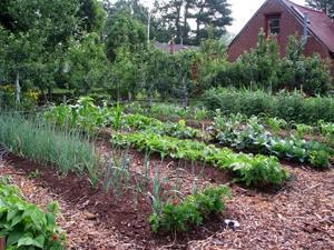 Gardening_Weedless1.jpg