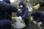Russia reports bird flu cases