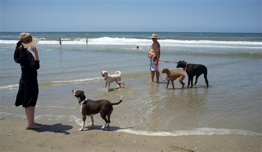 Pets Dog Beaches