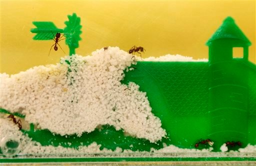 Pets_Ant_Farms1.jpg