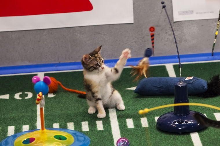 Pets Kitten Bowl