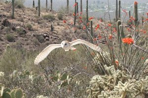 Bird watching helps state tourism industry soar