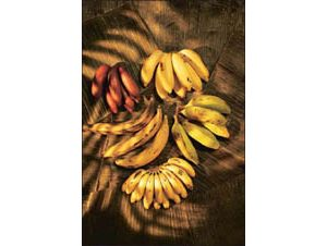 Variety comes in bunches of bananas
