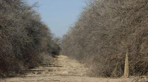 52,000 dead trees in Q.C. area to be removed